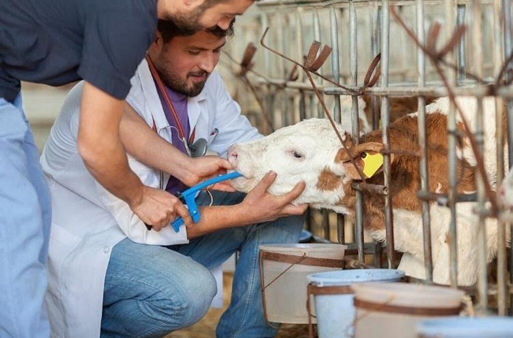 Abbotsford Vet Hospital and Veterinary Animal Clinic