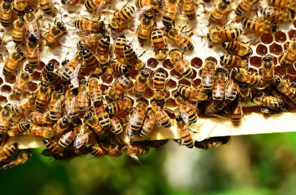 Symbiosis of Hemp and Bees